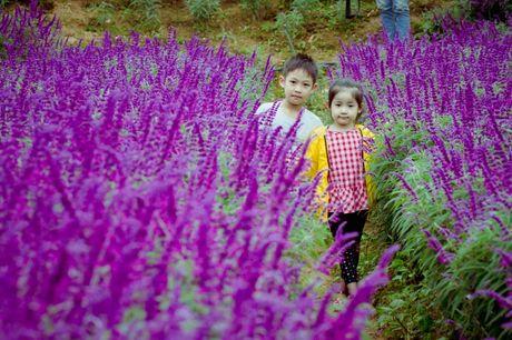 Hoa Oai huong nhuom tim thung lung Bac Ha - Anh 12