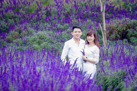 Hoa Oai huong nhuom tim thung lung Bac Ha - Anh 6