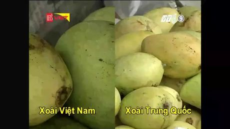 Cach don gian phan biet xoai Viet Nam va Trung Quoc - Anh 2