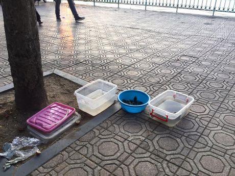 Hang quan ven Ho Tay the nao sau dai han ca chet hang loat? - Anh 10
