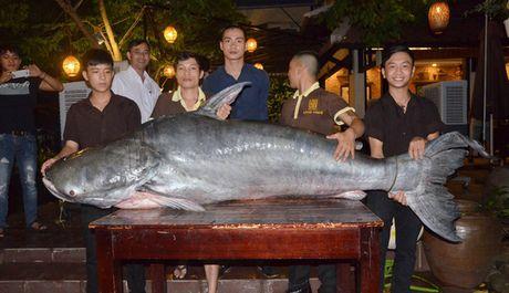 """Ca tra """"khung"""" 200 kg ve nha hang o Da Nang - Anh 1"""
