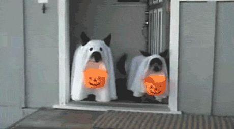 Halloween danh cho thu cung - Anh 15