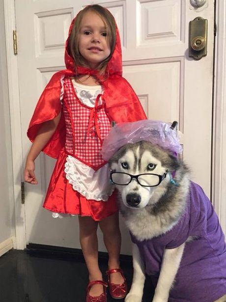 Halloween danh cho thu cung - Anh 1