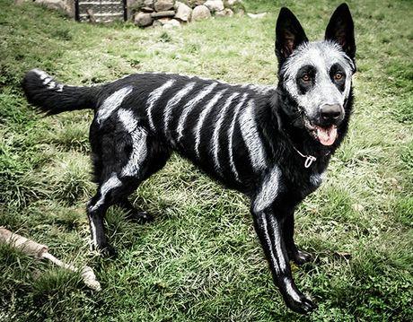 Halloween danh cho thu cung - Anh 2