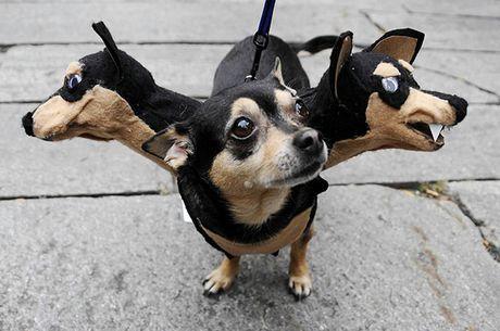 Halloween danh cho thu cung - Anh 7