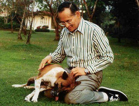 Tieu su Vua Thai Lan Bhumibol Adulyadej - Anh 3