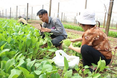 Nong dan Ha Noi di dau trong san xuat an toan - Anh 2