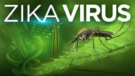 Viet Nam phat hien 7 truong hop nhiem nhiem vi rut Zika - Anh 1