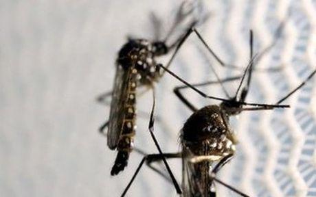 Phat hien virus Zika trong muoi van tu nhien o Nha Trang - Anh 1