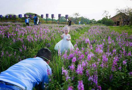 Thao nguyen hoa tuyet dep de chup anh cuoi giua Ha Noi - Anh 13