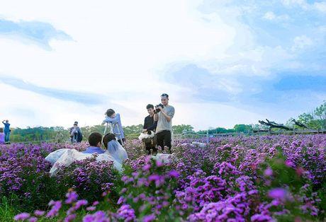 Thao nguyen hoa tuyet dep de chup anh cuoi giua Ha Noi - Anh 5