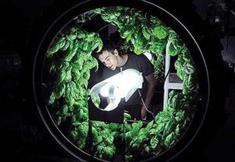 Trang trai trieu do: Trong rau trong nhung 'banh xe' - Anh 5