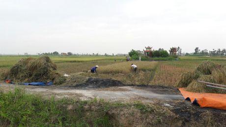 Nong dan Hai Phong gat lua chay bao so 7 - Anh 11