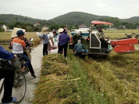 Nong dan Hai Phong gat lua chay bao so 7 - Anh 3