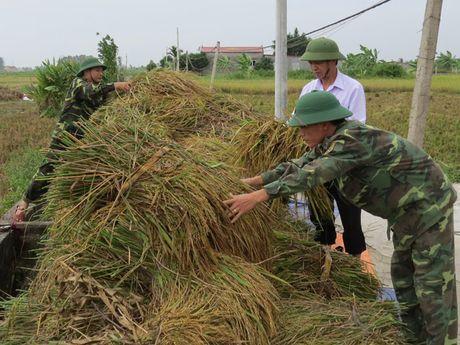 Hai Phong: Hang nghin chien si giup dan thu hoach lua mua chay bao - Anh 6