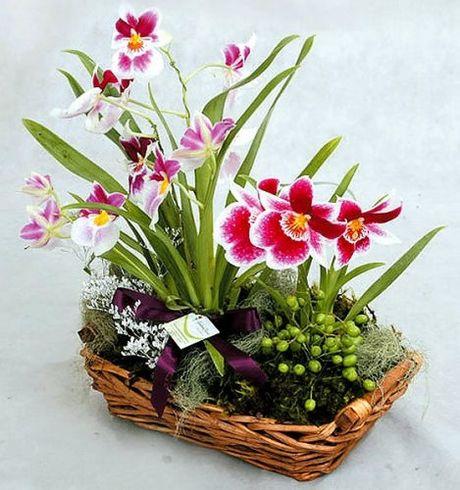 Goi y hoa tang nguoi yeu nhan ngay 20/10 - Anh 6
