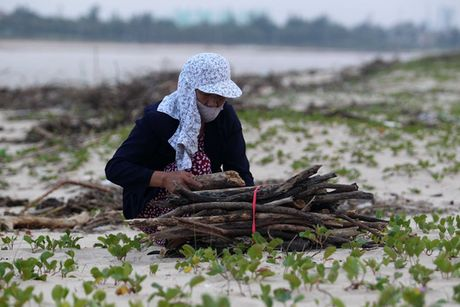Sau lu, rac thai ngap bo bien Quang Binh - Anh 6