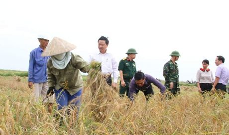 Chu tich Hai Phong xuong ruong gat lua - Anh 1