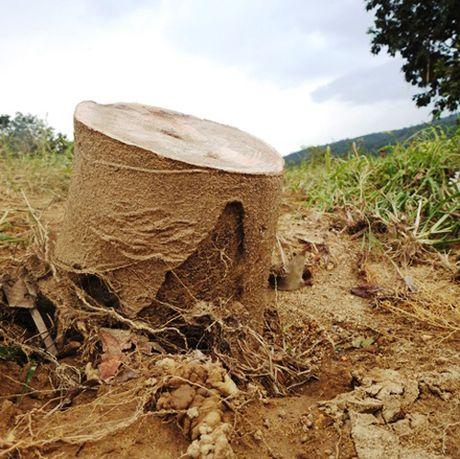 Can canh vuon buoi Phuc Trach cua nguoi dan Ha Tinh tan hoang sau lu - Anh 4