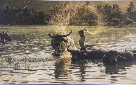 Ngắm 'những dòng sông Việt Nam' qua ảnh