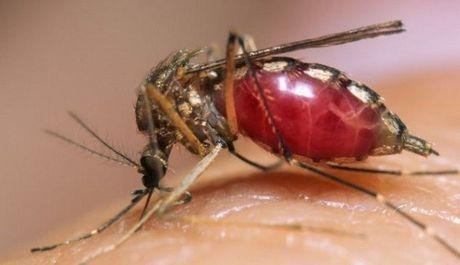 Nhiễm virus Zika do quan hệ tình dục