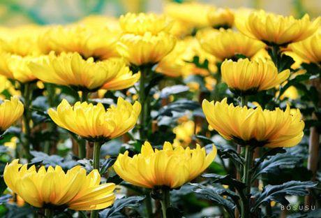 1 57600 Trưng hoa gì để tươi lâu, mang lại giàu sang phú quý ngày Tết?