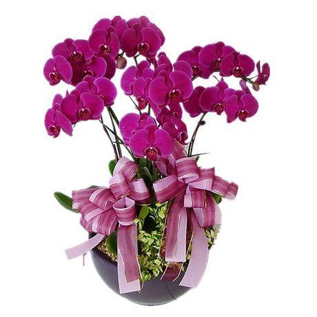 3 51437 Trưng hoa gì để tươi lâu, mang lại giàu sang phú quý ngày Tết?