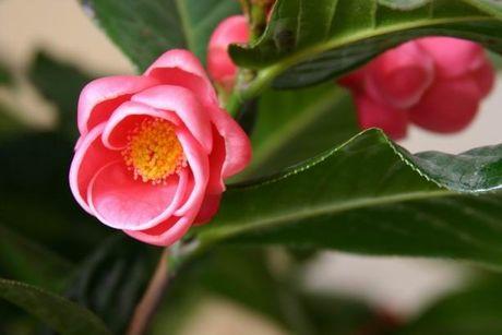 4 35521 Trưng hoa gì để tươi lâu, mang lại giàu sang phú quý ngày Tết?