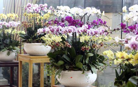 Tet Dinh Dau 2017: Chuyen gia phong thuy goi y chon mua hoa choi Tet de ruoc loc tai - Anh 4